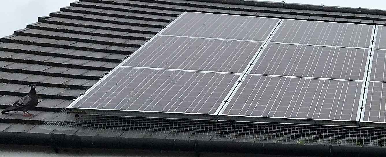 Pigeon Proofing Solar Panels Glasgow